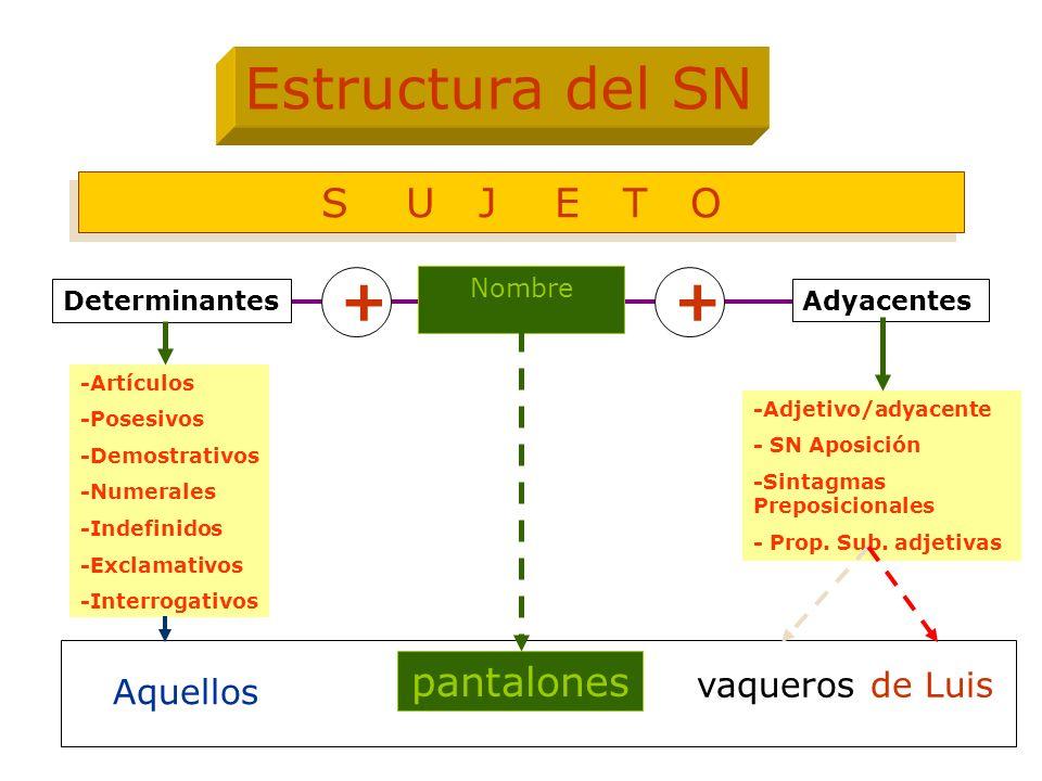 Estructura del SN + + S U J E T O pantalones vaqueros de Luis Aquellos