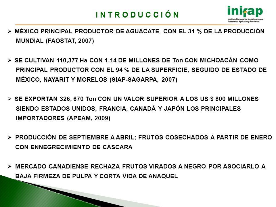 I N T R O D U C C I Ó N MÉXICO PRINCIPAL PRODUCTOR DE AGUACATE CON EL 31 % DE LA PRODUCCIÓN. MUNDIAL (FAOSTAT, 2007)