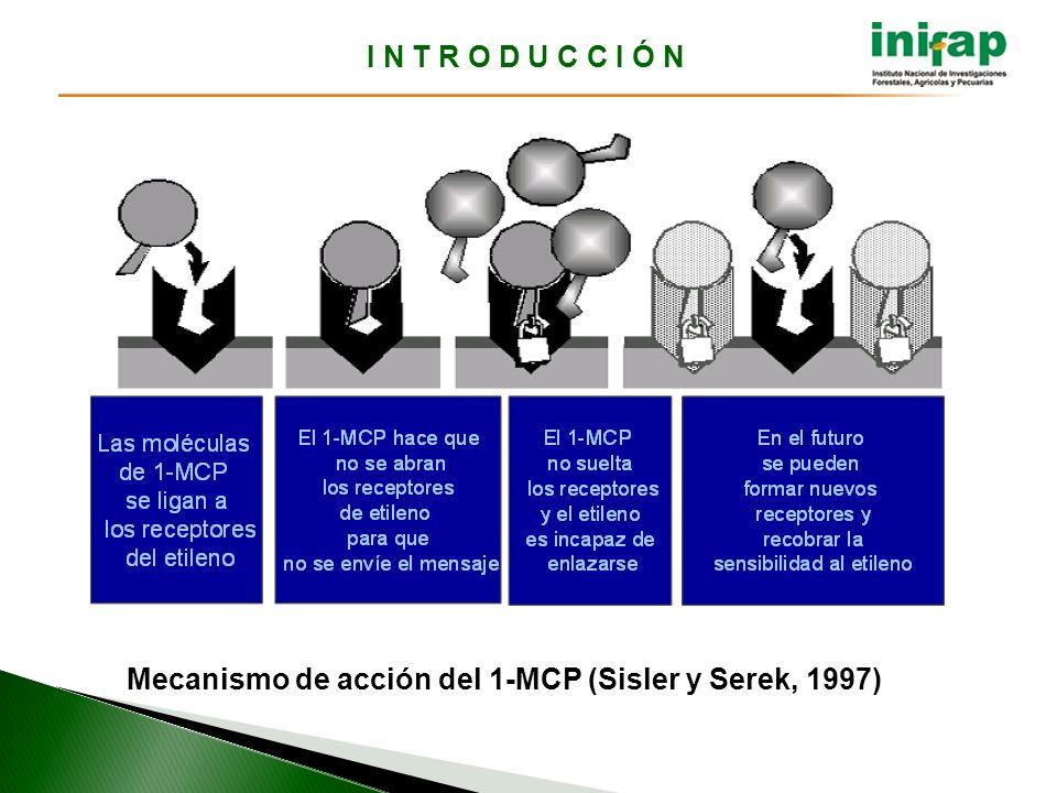 I N T R O D U C C I Ó N Mecanismo de acción del 1-MCP (Sisler y Serek, 1997)