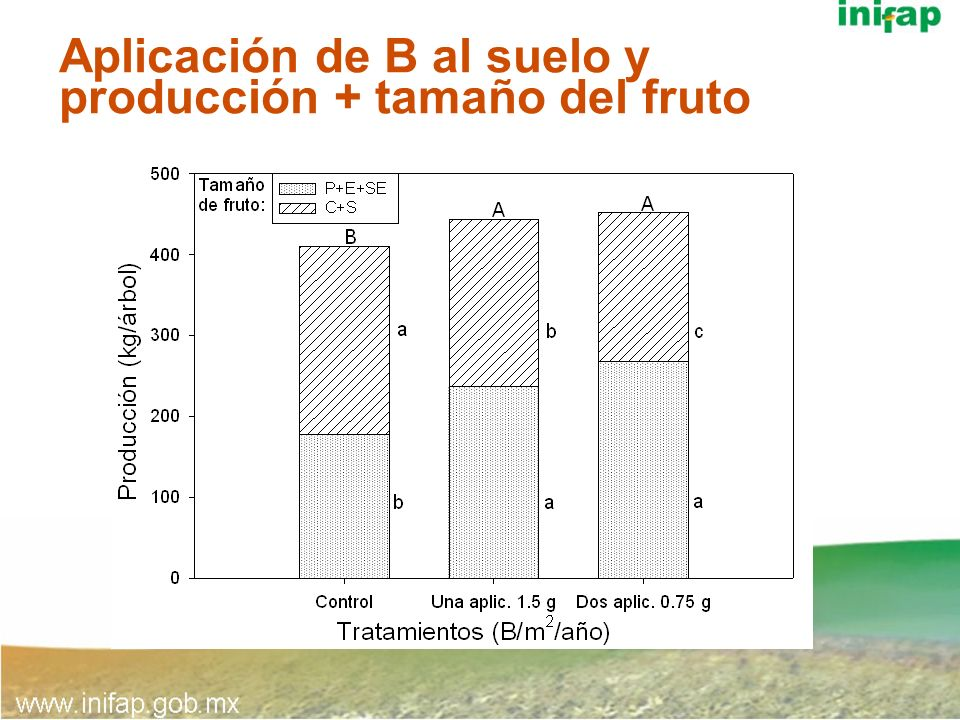 Aplicación de B al suelo y producción + tamaño del fruto