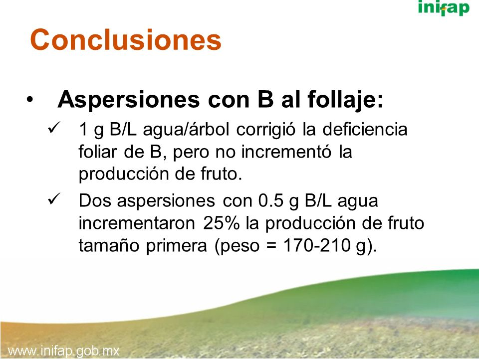 Conclusiones Aspersiones con B al follaje: