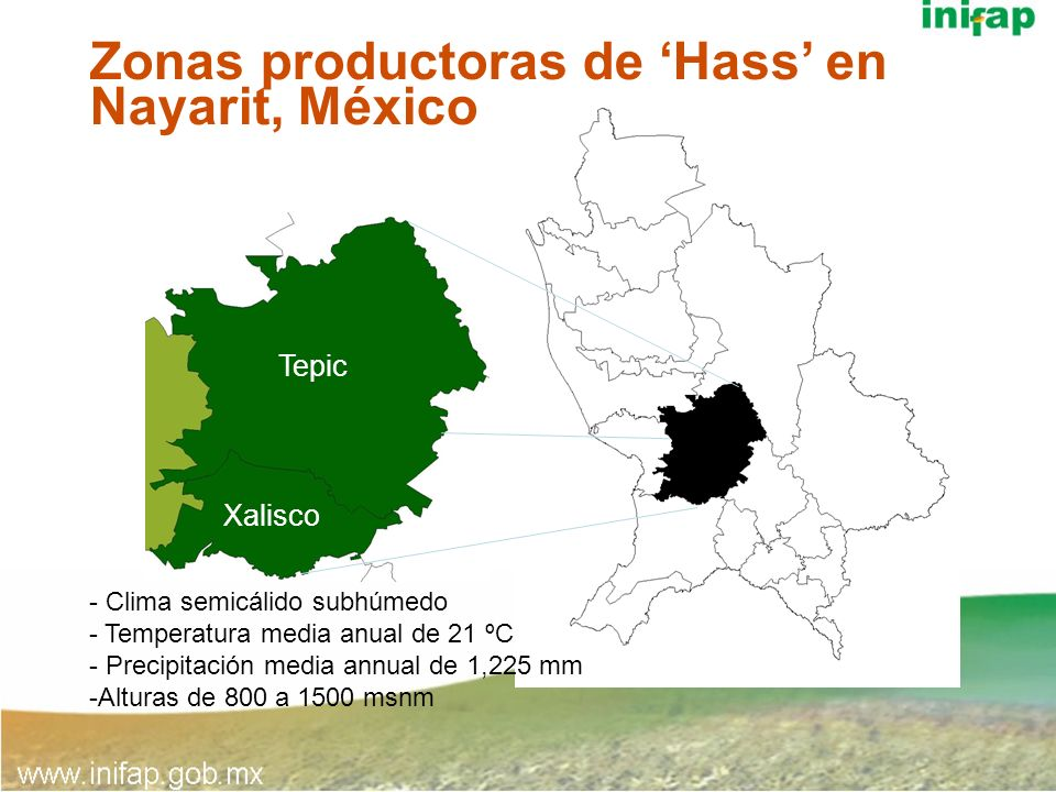 Zonas productoras de 'Hass' en Nayarit, México