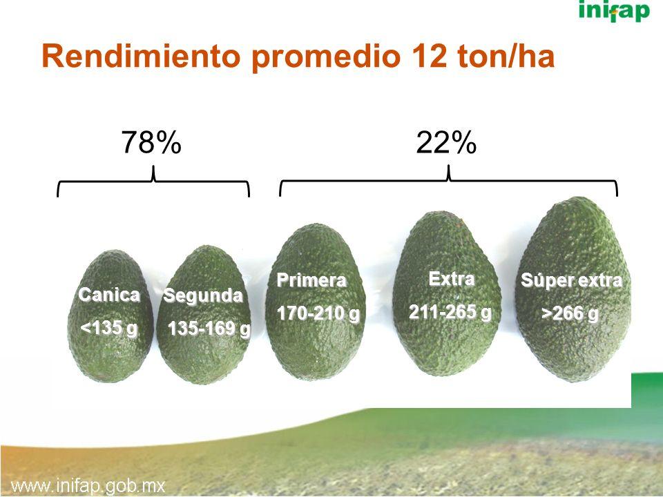 Rendimiento promedio 12 ton/ha