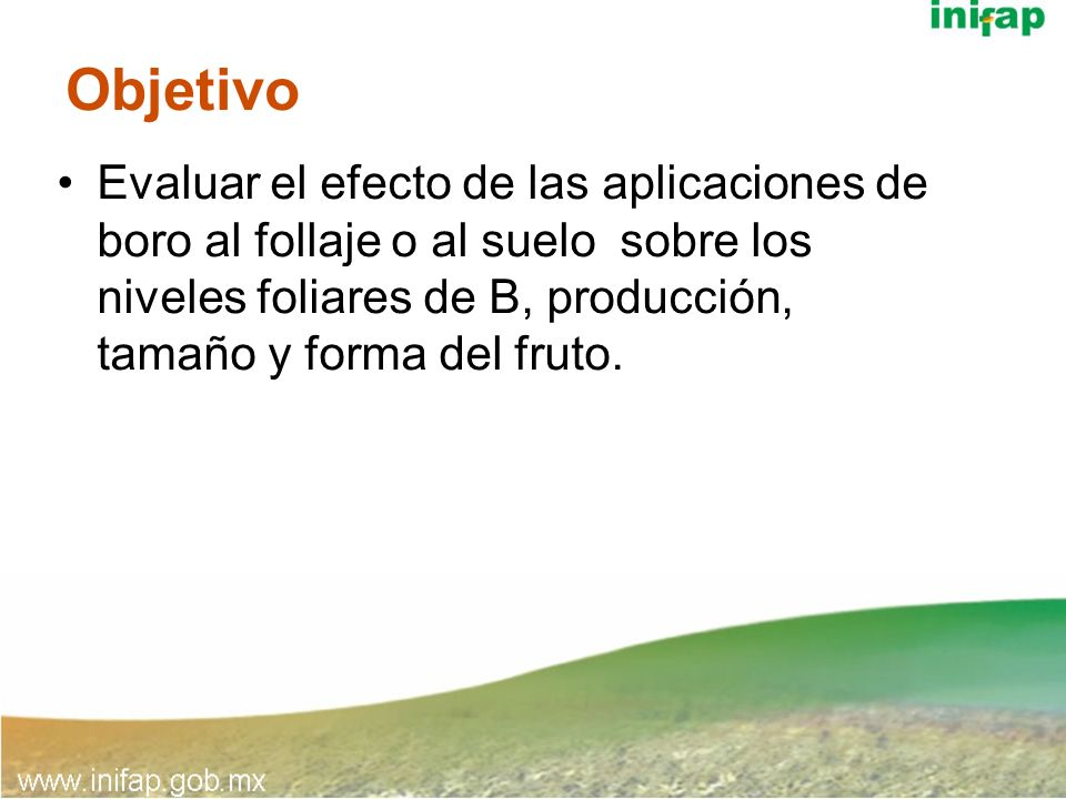 ObjetivoEvaluar el efecto de las aplicaciones de boro al follaje o al suelo sobre los niveles foliares de B, producción, tamaño y forma del fruto.
