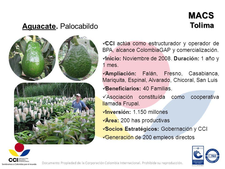 MACS Tolima Aguacate. Palocabildo