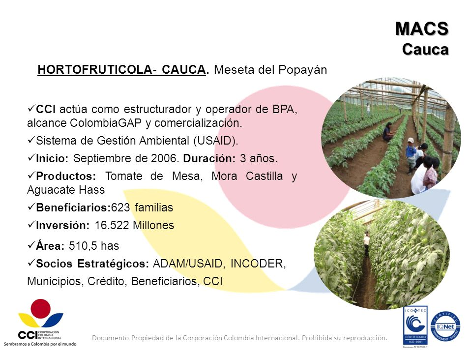 MACS Cauca HORTOFRUTICOLA- CAUCA. Meseta del Popayán