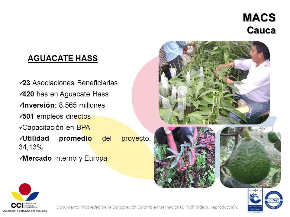 MACS Cauca AGUACATE HASS 23 Asociaciones Beneficiarias