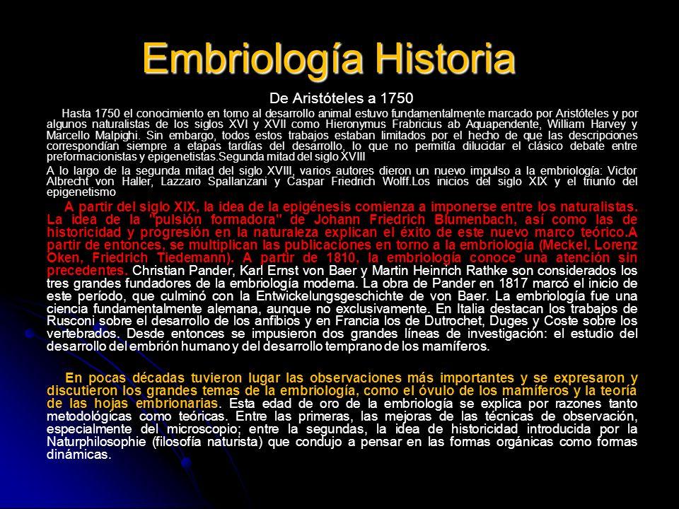 Embriología Historia De Aristóteles a 1750