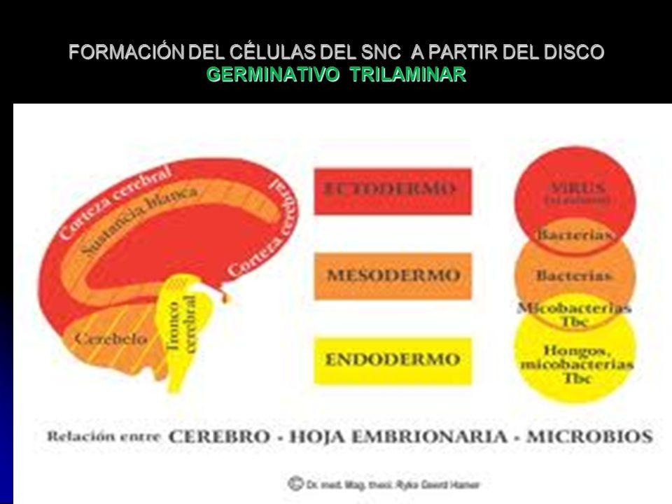 FORMACIÓN DEL CÉLULAS DEL SNC A PARTIR DEL DISCO GERMINATIVO TRILAMINAR