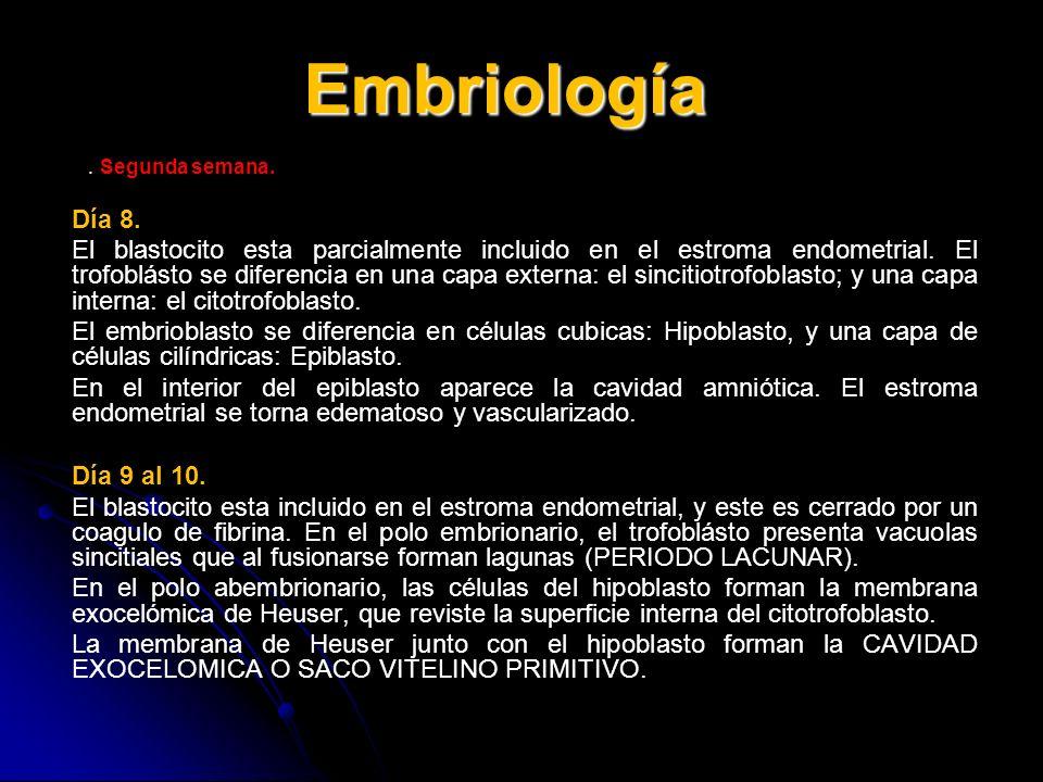 Embriología . Segunda semana. Día 8.