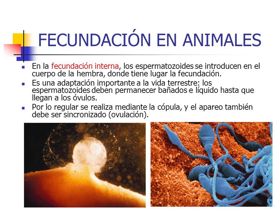 FECUNDACIÓN EN ANIMALES