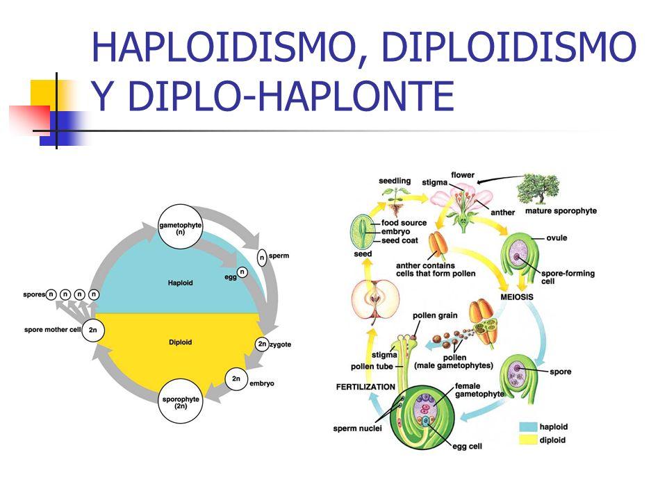 HAPLOIDISMO, DIPLOIDISMO Y DIPLO-HAPLONTE