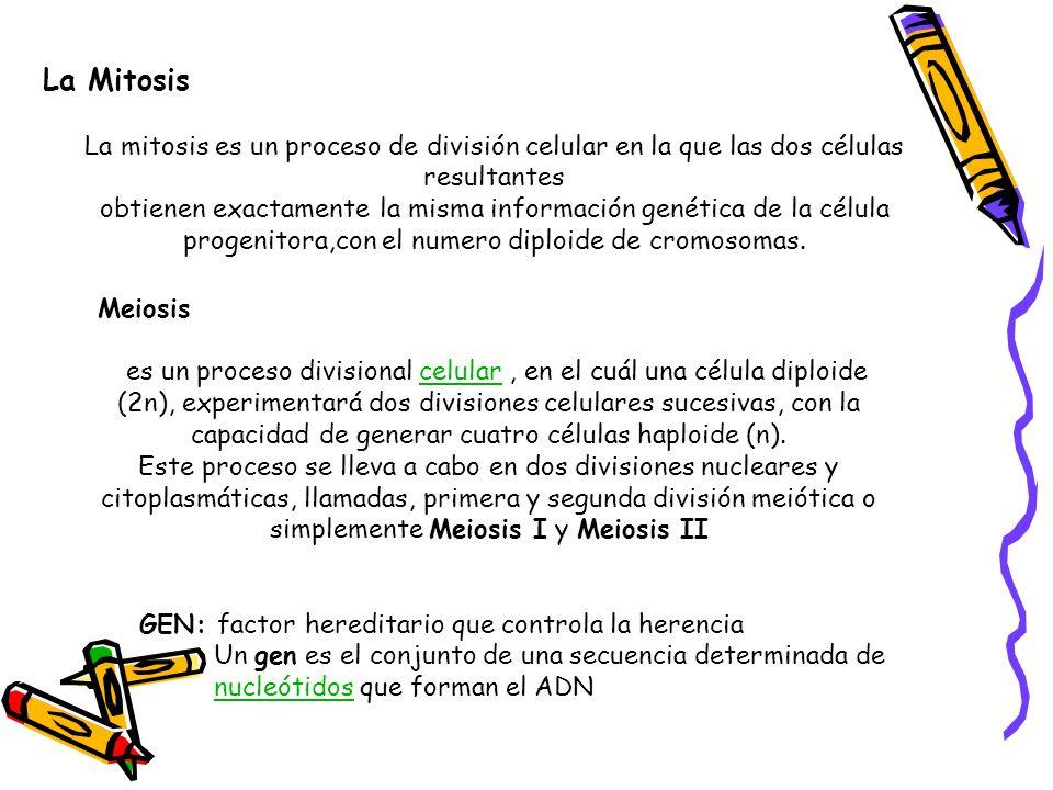La Mitosis La mitosis es un proceso de división celular en la que las dos células resultantes.