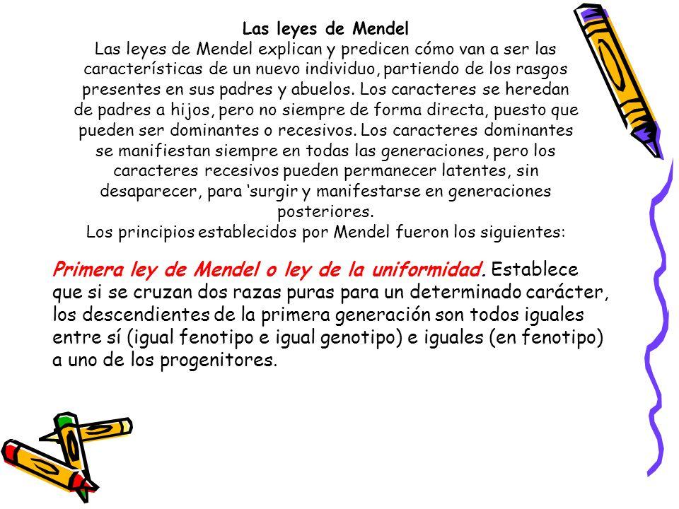 Los principios establecidos por Mendel fueron los siguientes: