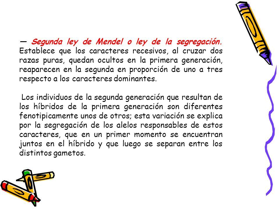 — Segunda ley de Mendel o ley de la segregación
