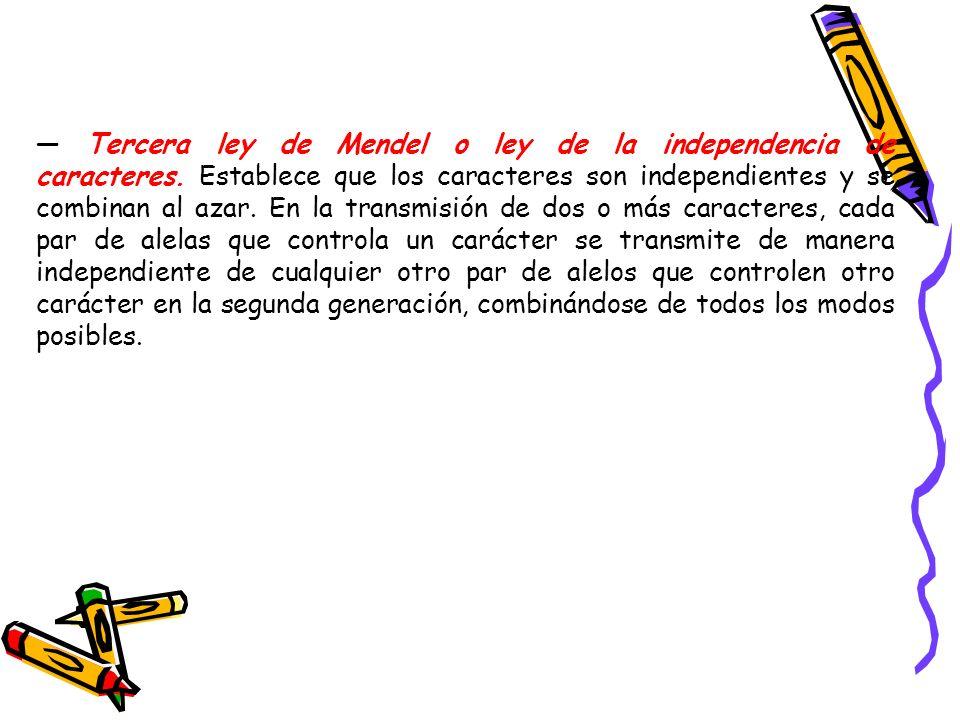 — Tercera ley de Mendel o ley de la independencia de caracteres