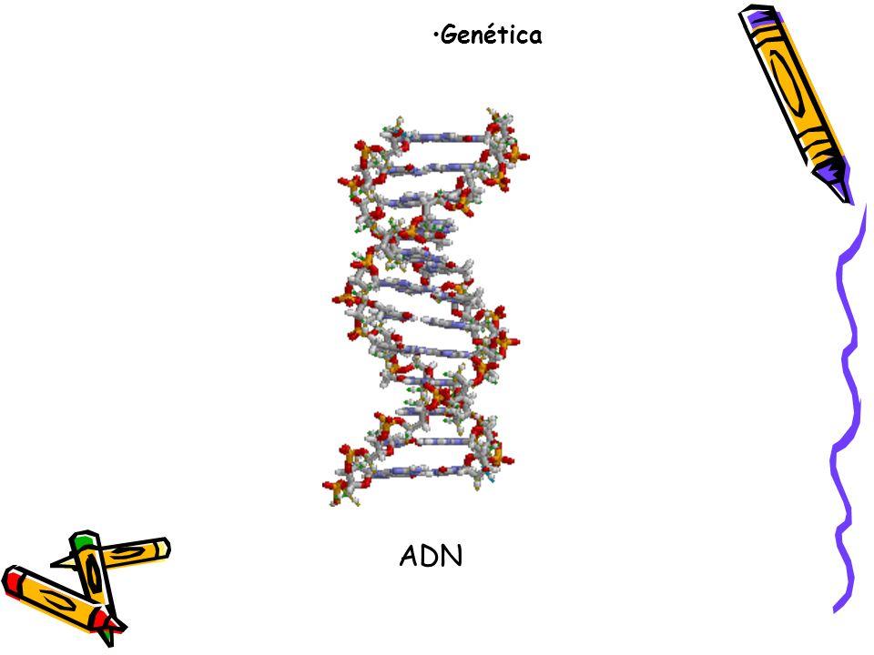 Genética ADN