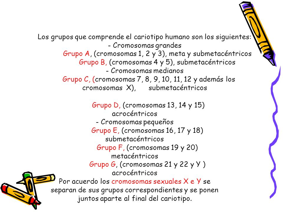 Los grupos que comprende el cariotipo humano son los siguientes: