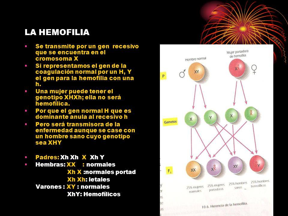 LA HEMOFILIA Se transmite por un gen recesivo que se encuentra en el cromosoma X.