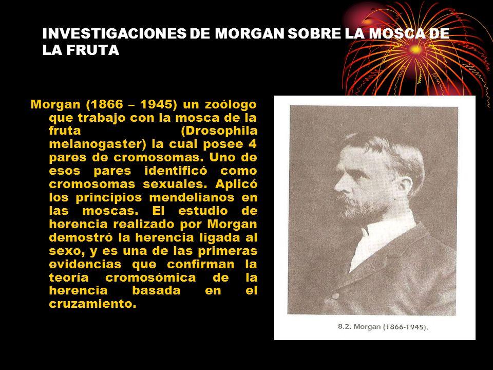 INVESTIGACIONES DE MORGAN SOBRE LA MOSCA DE LA FRUTA