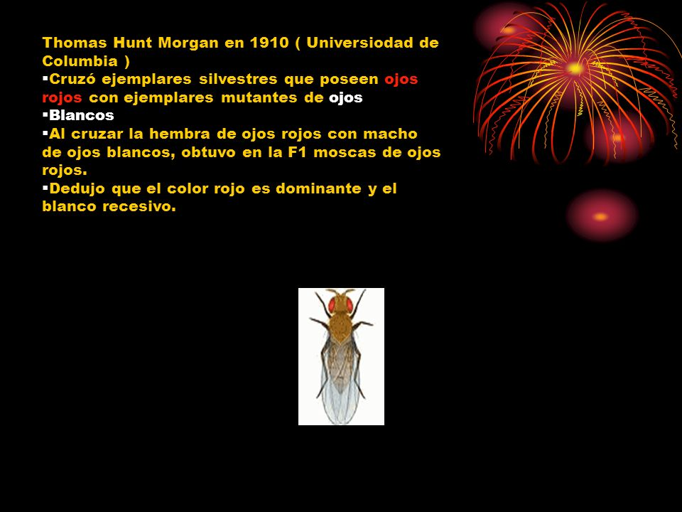 Thomas Hunt Morgan en 1910 ( Universiodad de Columbia )
