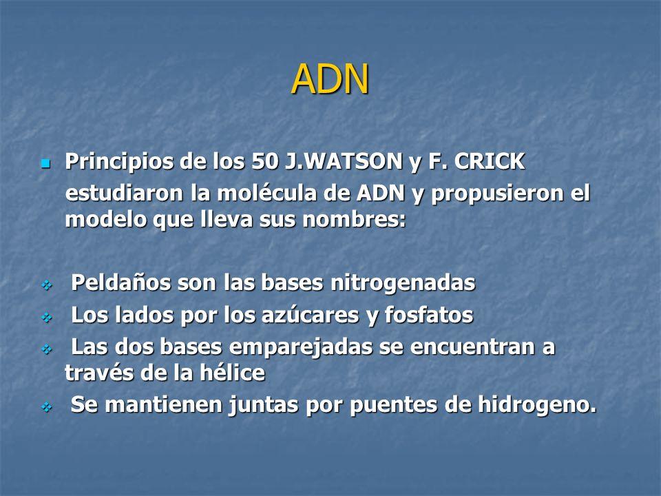 ADN Principios de los 50 J.WATSON y F. CRICK
