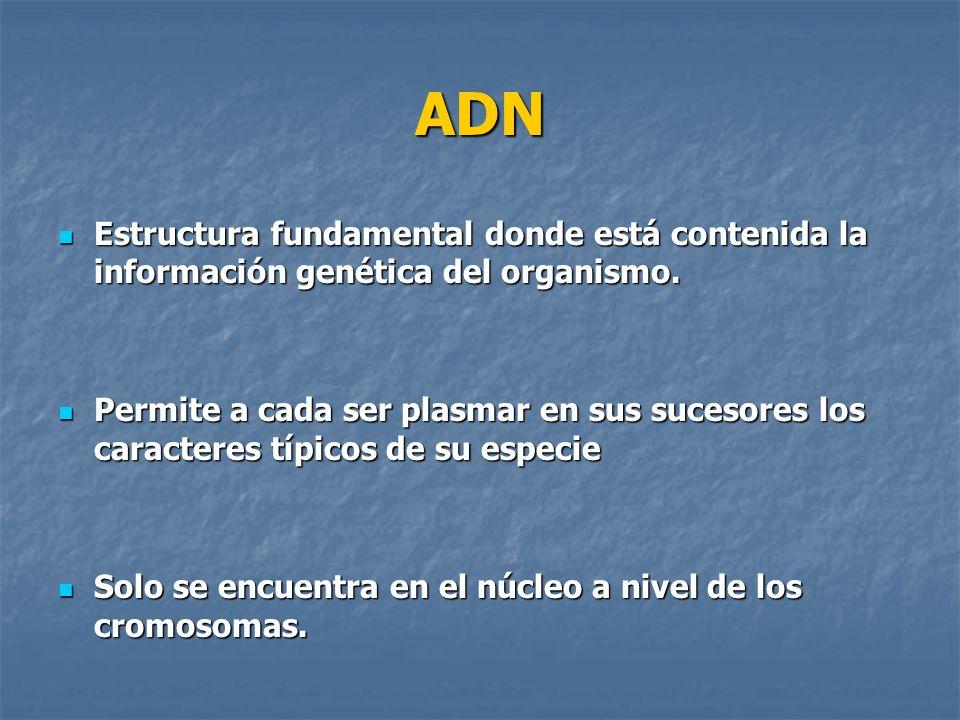 ADN Estructura fundamental donde está contenida la información genética del organismo.