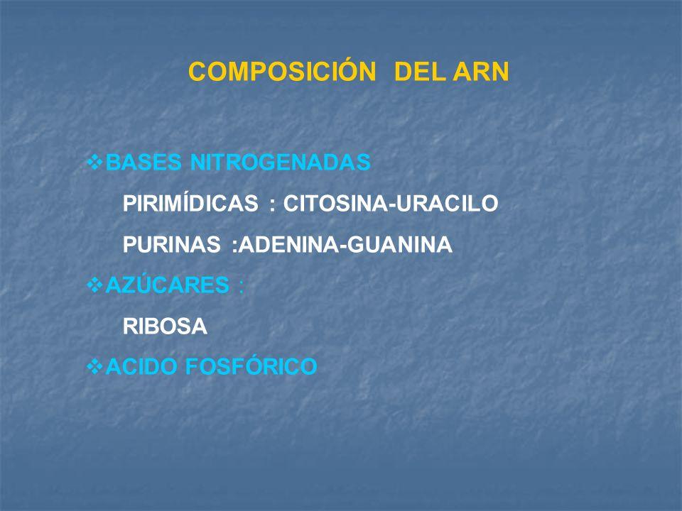 COMPOSICIÓN DEL ARN BASES NITROGENADAS PIRIMÍDICAS : CITOSINA-URACILO