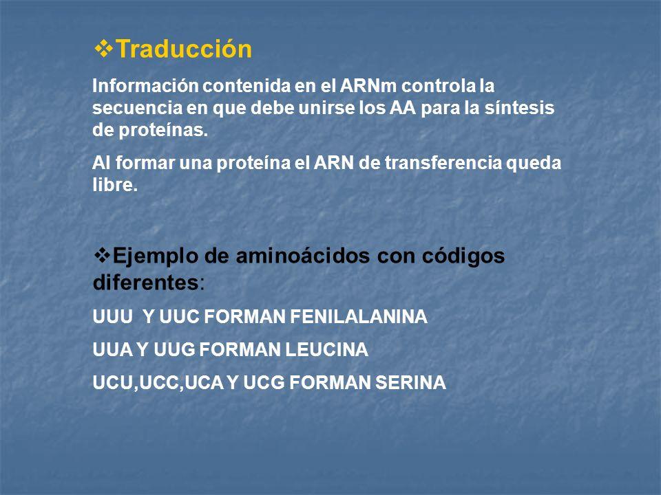 Traducción Ejemplo de aminoácidos con códigos diferentes: