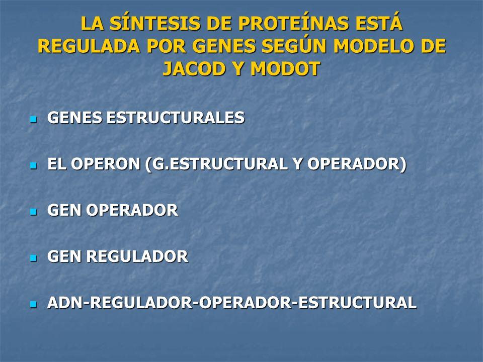 LA SÍNTESIS DE PROTEÍNAS ESTÁ REGULADA POR GENES SEGÚN MODELO DE JACOD Y MODOT