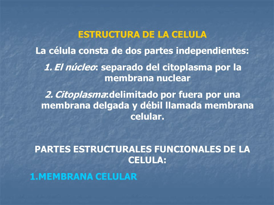 ESTRUCTURA DE LA CELULA La célula consta de dos partes independientes: