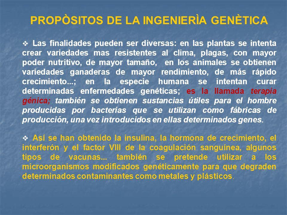 PROPÒSITOS DE LA INGENIERÌA GENÈTICA