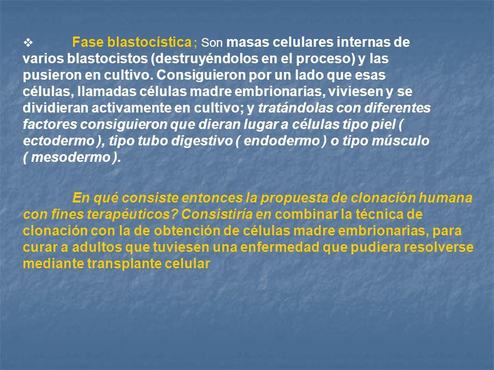 Fase blastocística ; Son masas celulares internas de varios blastocistos (destruyéndolos en el proceso) y las pusieron en cultivo. Consiguieron por un lado que esas células, llamadas células madre embrionarias, viviesen y se dividieran activamente en cultivo; y tratándolas con diferentes factores consiguieron que dieran lugar a células tipo piel ( ectodermo ), tipo tubo digestivo ( endodermo ) o tipo músculo ( mesodermo ).