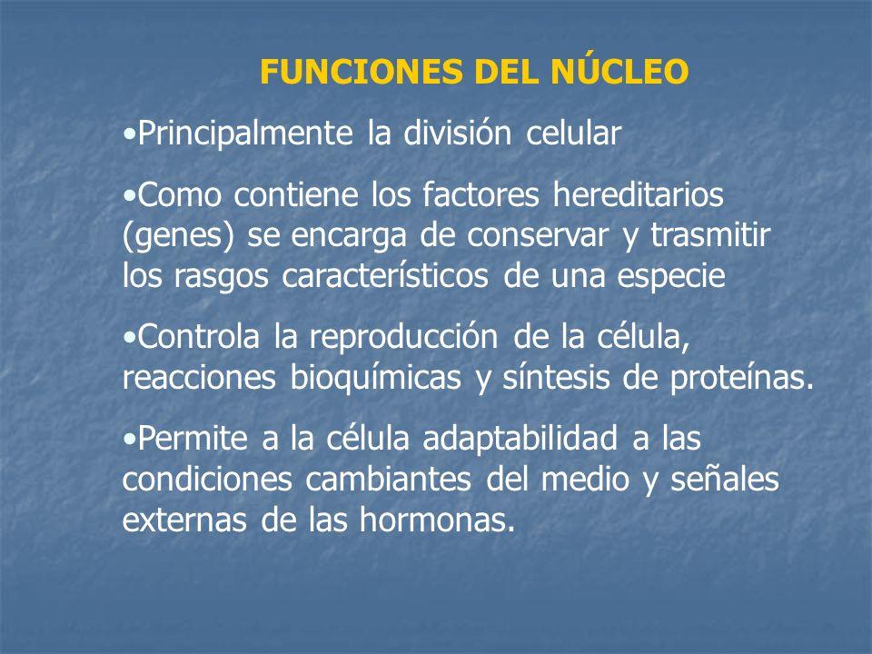 FUNCIONES DEL NÚCLEO Principalmente la división celular.