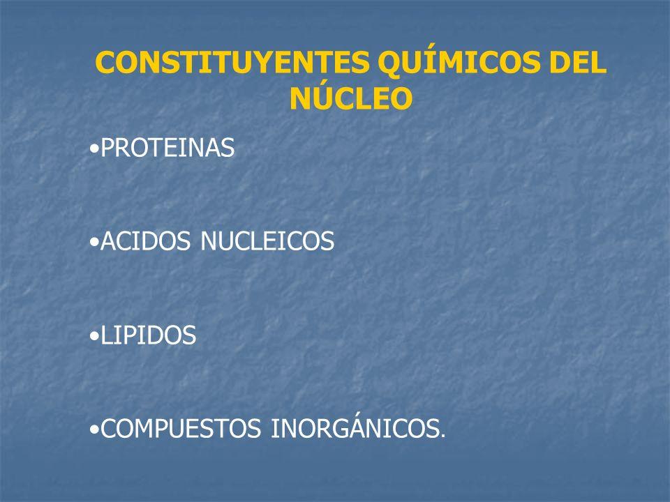 CONSTITUYENTES QUÍMICOS DEL NÚCLEO