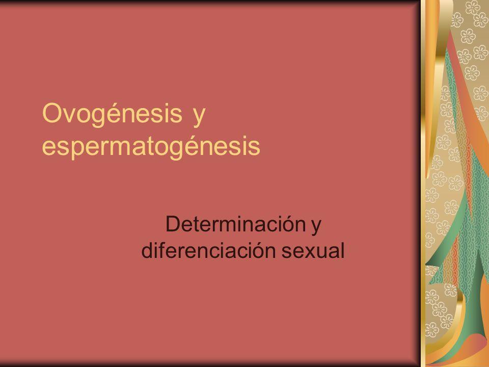 Ovogénesis y espermatogénesis