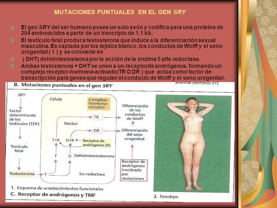 MUTACIONES PUNTUALES EN EL GEN SRY