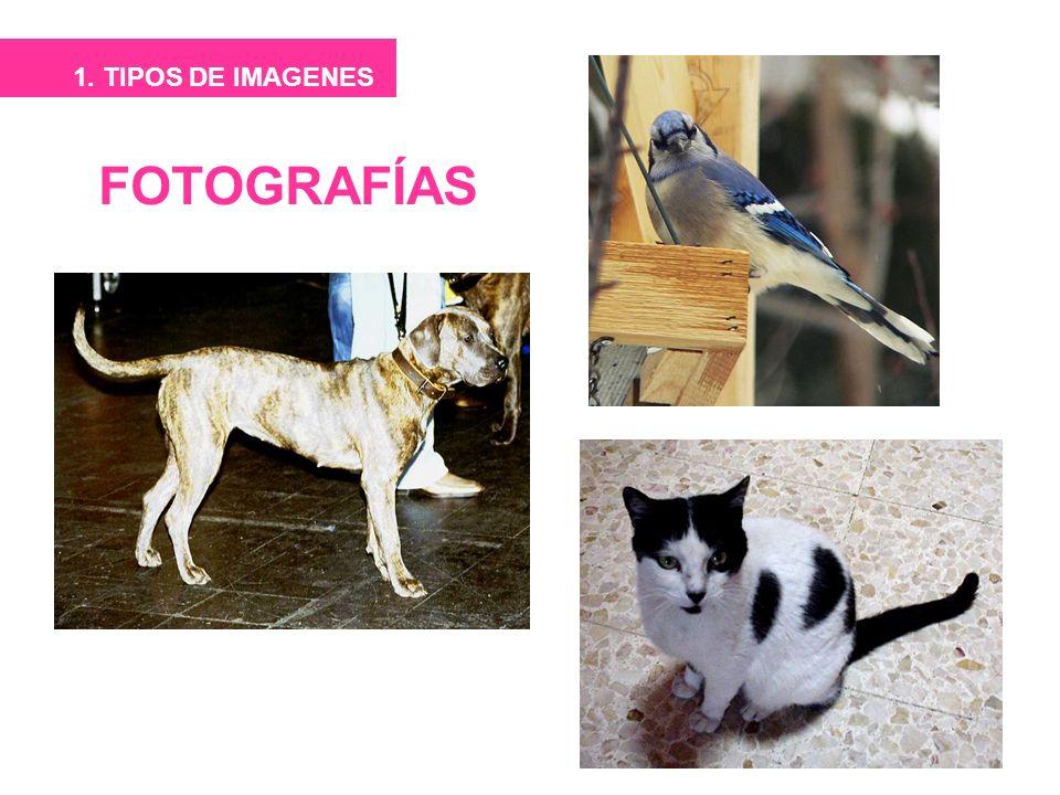 1. TIPOS DE IMAGENES FOTOGRAFÍAS