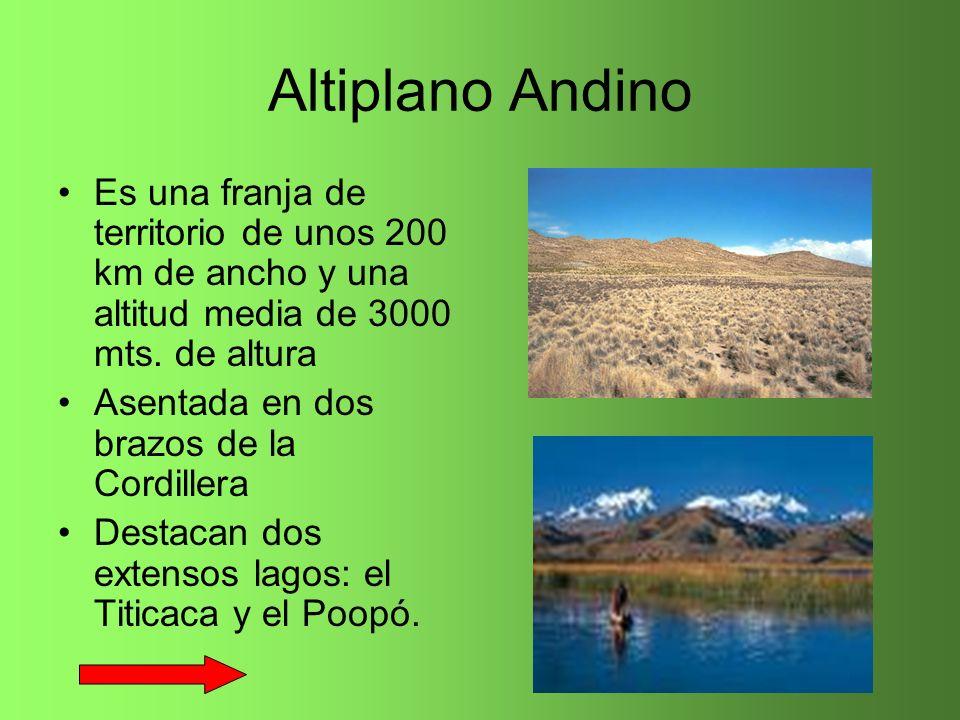 Altiplano Andino Es una franja de territorio de unos 200 km de ancho y una altitud media de 3000 mts. de altura.