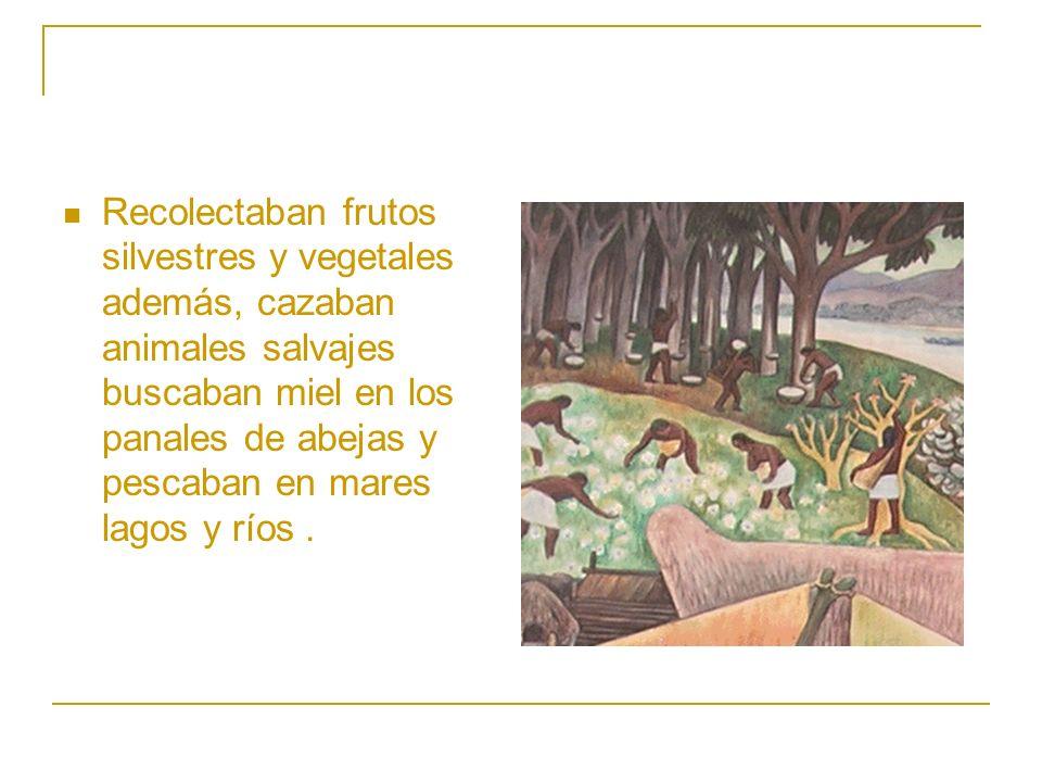 Recolectaban frutos silvestres y vegetales además, cazaban animales salvajes buscaban miel en los panales de abejas y pescaban en mares lagos y ríos .