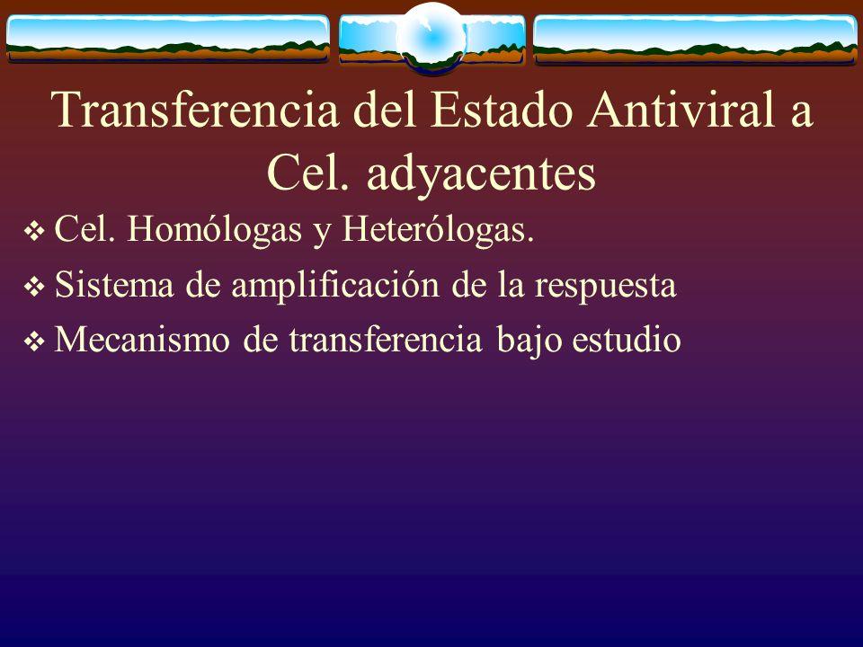 Transferencia del Estado Antiviral a Cel. adyacentes