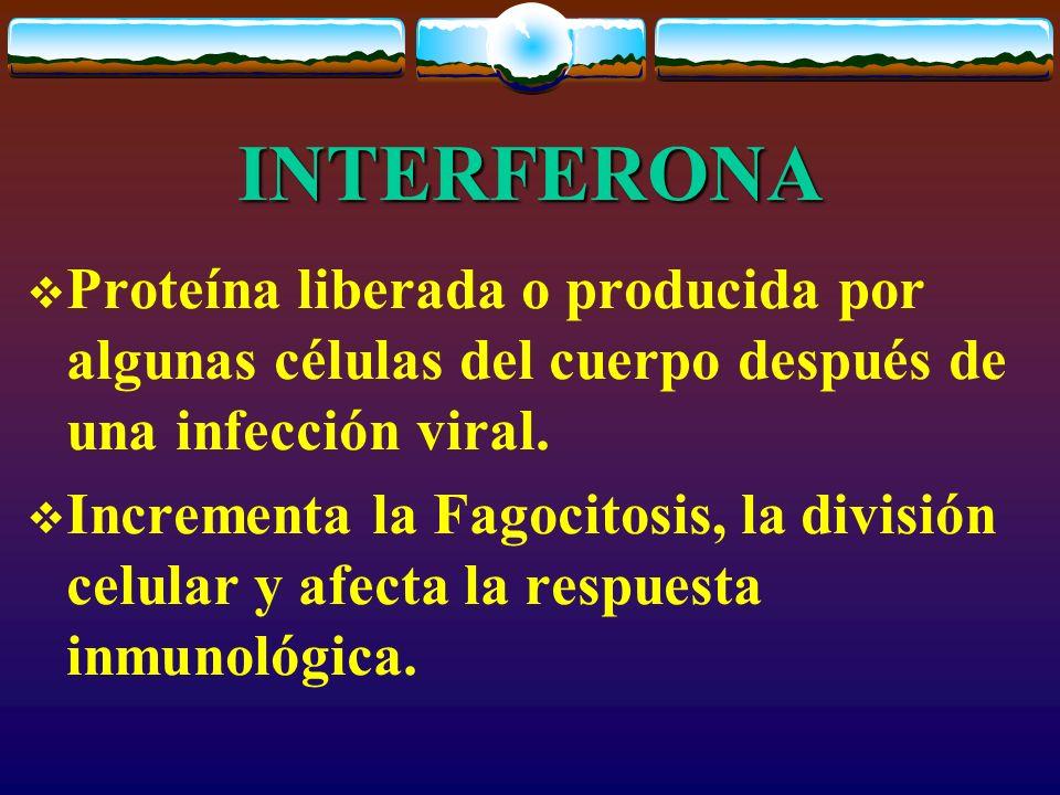 INTERFERONA Proteína liberada o producida por algunas células del cuerpo después de una infección viral.