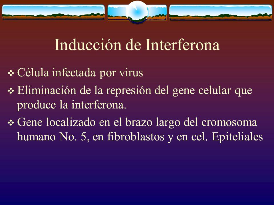 Inducción de Interferona