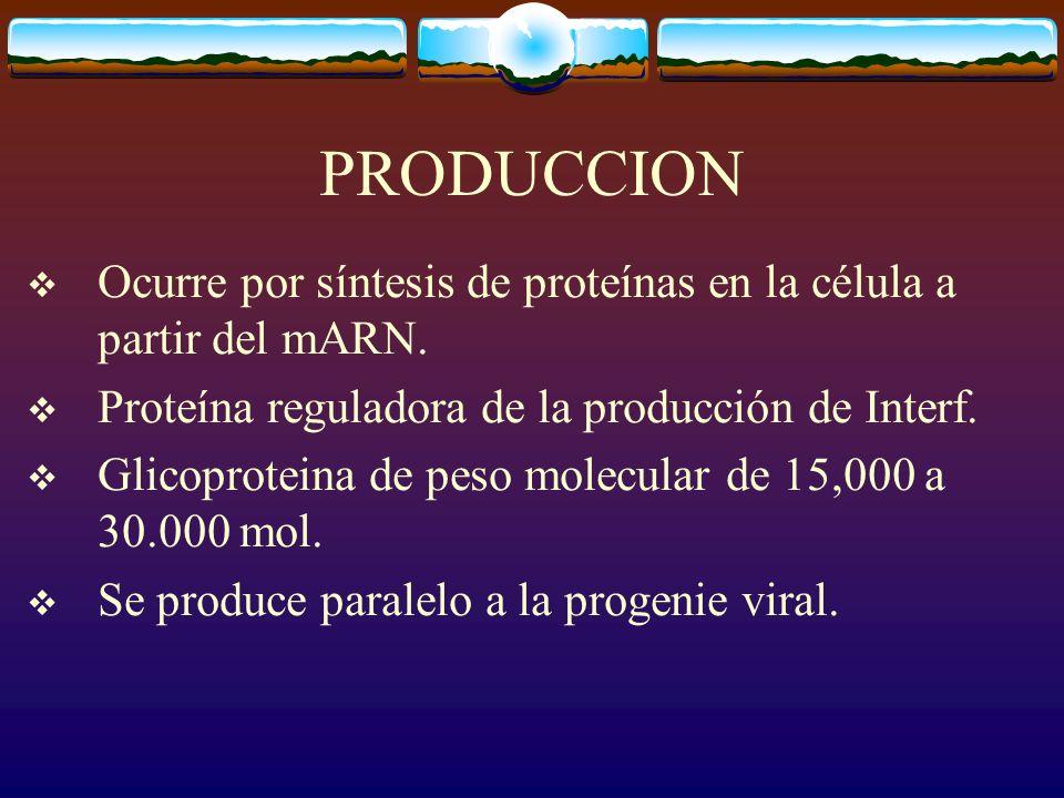 PRODUCCION Ocurre por síntesis de proteínas en la célula a partir del mARN. Proteína reguladora de la producción de Interf.