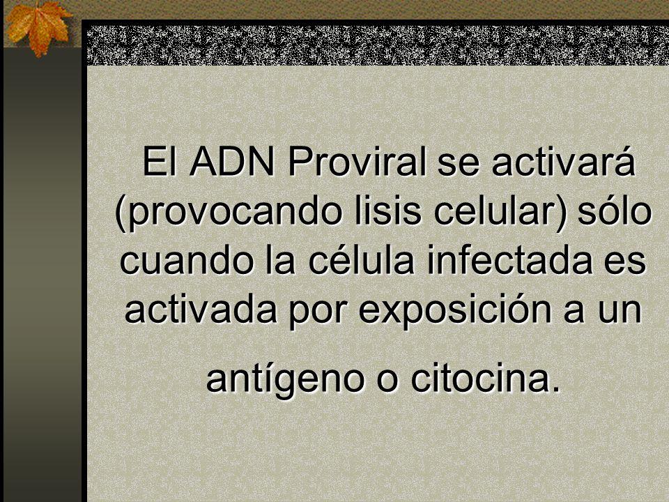 El ADN Proviral se activará (provocando lisis celular) sólo cuando la célula infectada es activada por exposición a un antígeno o citocina.