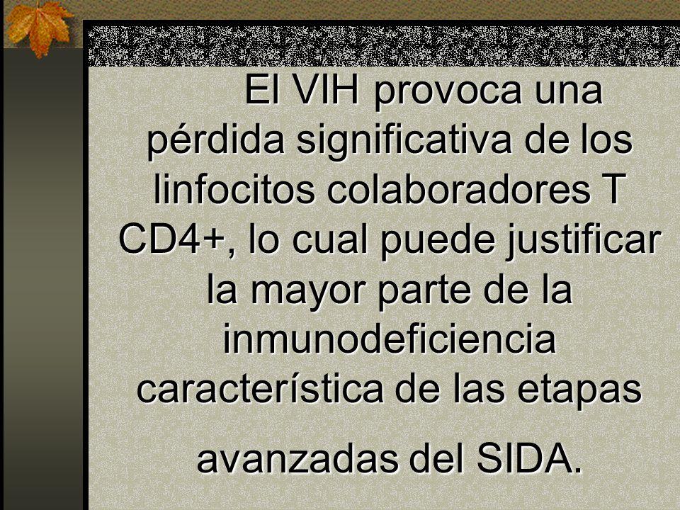 El VIH provoca una pérdida significativa de los linfocitos colaboradores T CD4+, lo cual puede justificar la mayor parte de la inmunodeficiencia característica de las etapas avanzadas del SIDA.