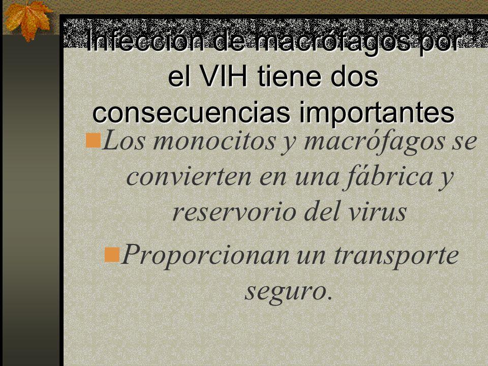 Infección de macrófagos por el VIH tiene dos consecuencias importantes