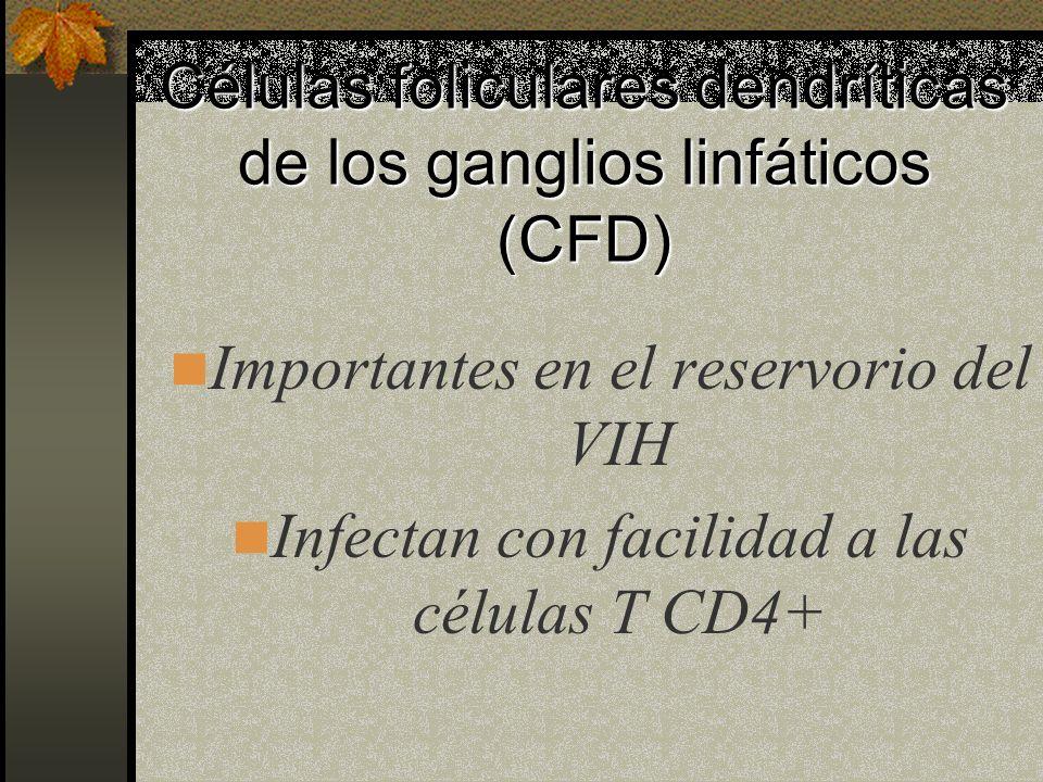Células foliculares dendríticas de los ganglios linfáticos (CFD)
