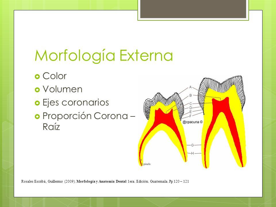Morfología Externa Color Volumen Ejes coronarios