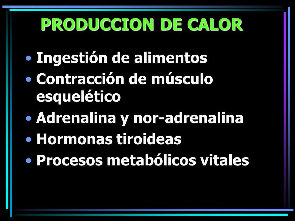 PRODUCCION DE CALOR Ingestión de alimentos